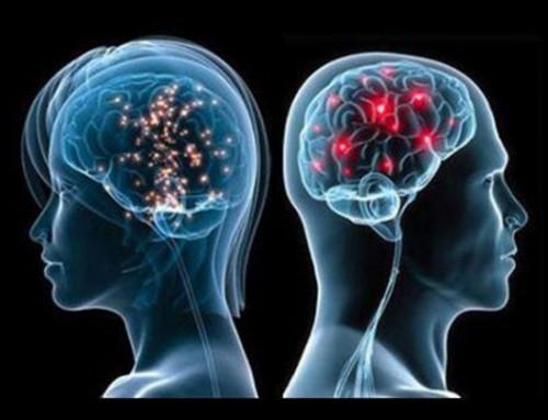 Gender In The Brain