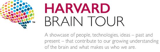 Resultado de imagem para harvard brain tour