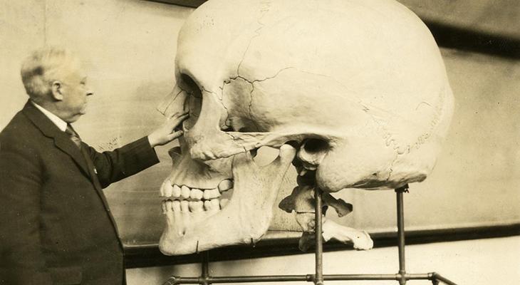 teaching-skull