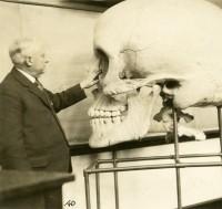 Teaching Skull