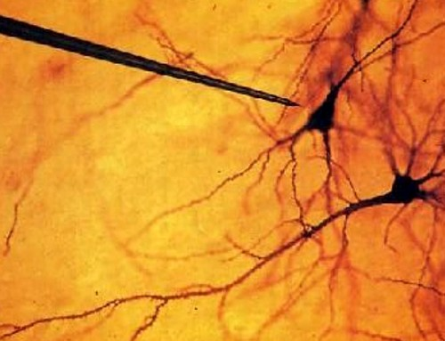 Eavesdropping on Neurons